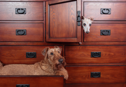 Gringo Furniture Blog Dresser Dogs